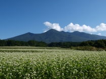 八ヶ岳と蕎麦畑