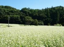 蕎麦畑と池生神社