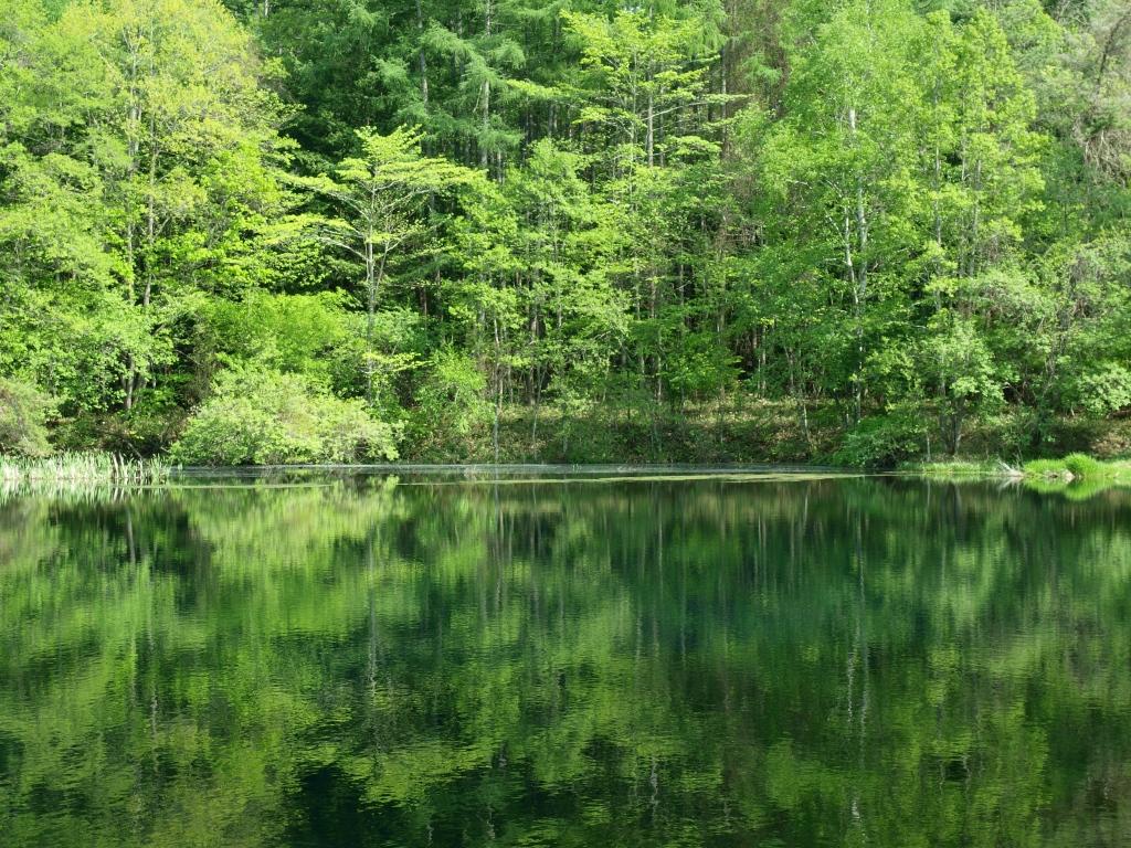 初夏の笹原溜池