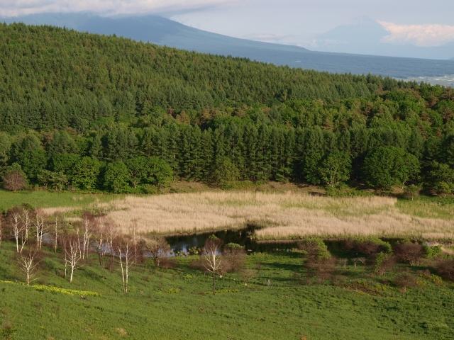 池のくるみ中心部と新緑