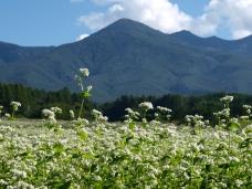 編笠山と蕎麦畑