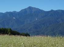 甲斐駒と蕎麦畑