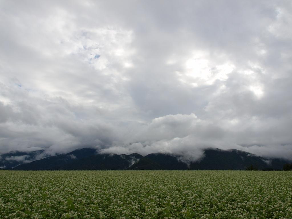 蕎麦畑と雲