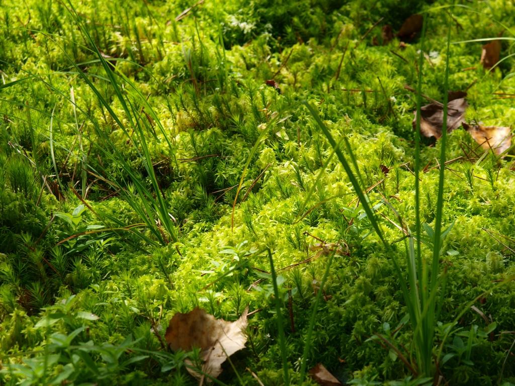御射鹿池の畔で1苔の林