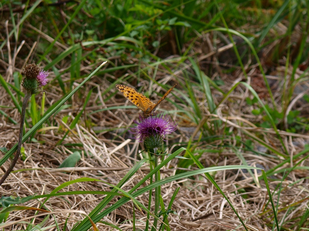 御射鹿池の畔で3羽を休める蝶を