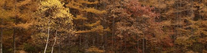 御射鹿池の四季(新緑、紅葉、そして冬)