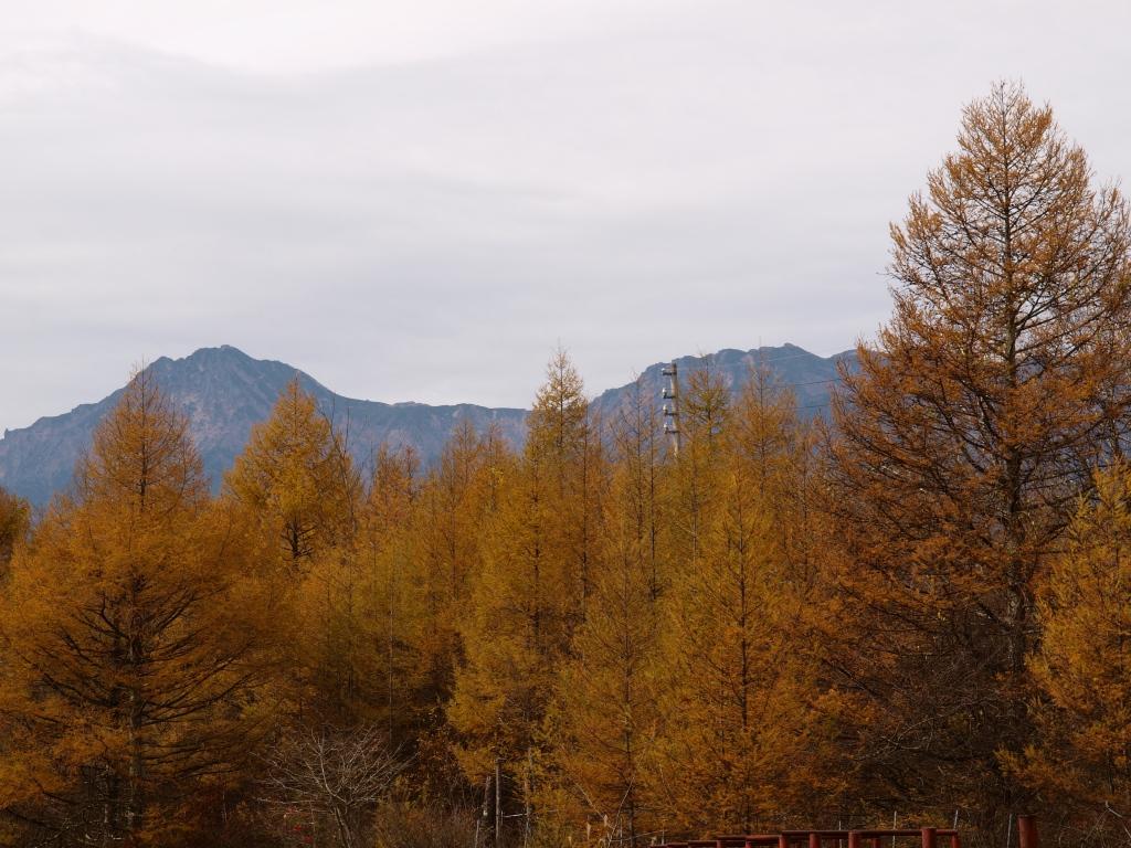 落葉松林越しに八ヶ岳を