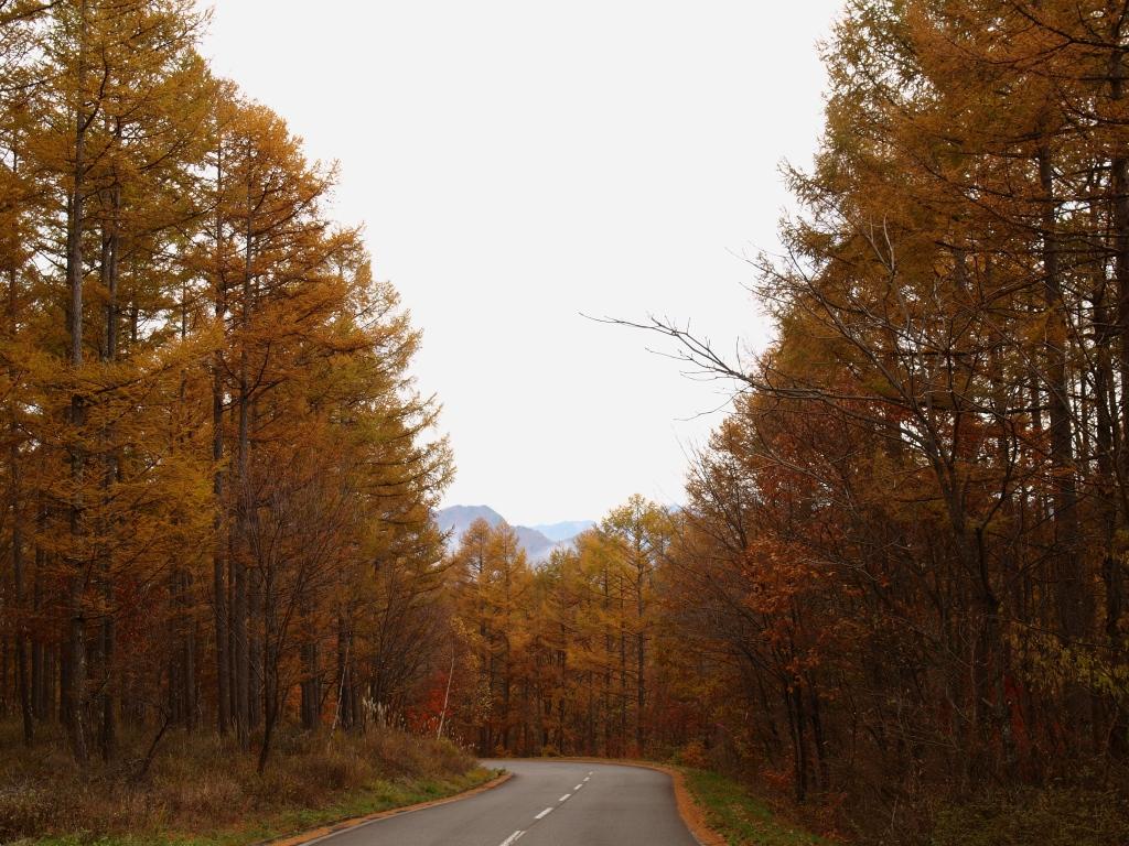海ノ口牧場の落葉松林