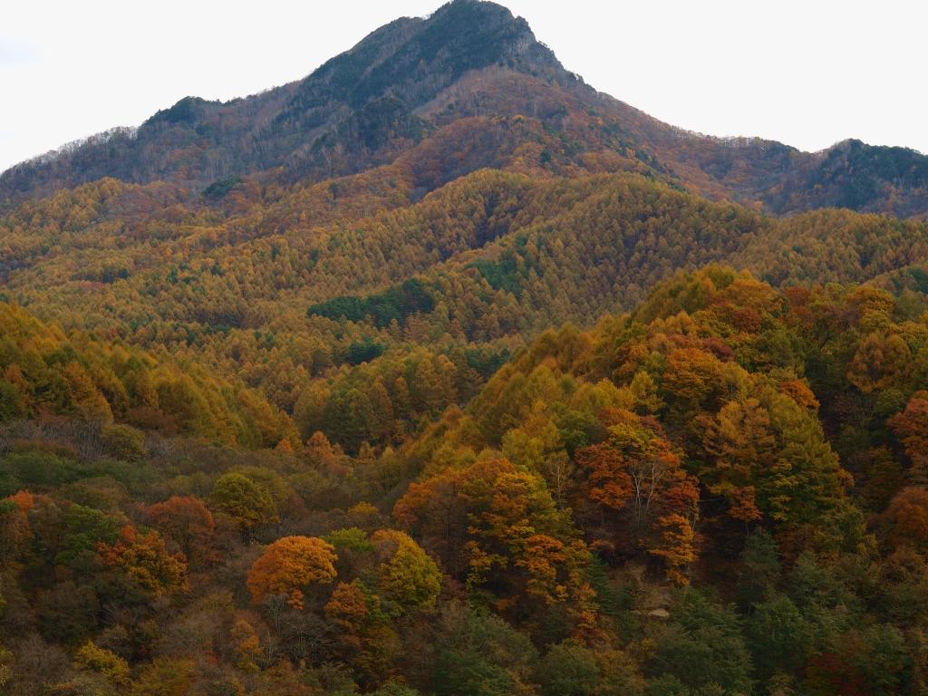 佐久広瀬駅から男山と落葉松の黄葉