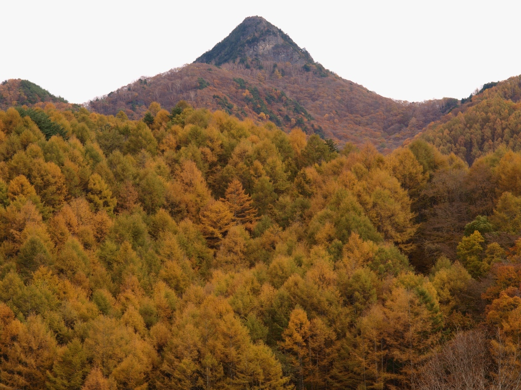 川平から男山と落葉松の黄葉