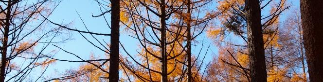 八ヶ岳山麓を彩る落葉松の四季