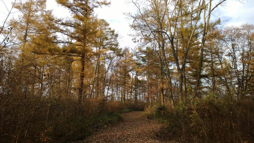 秋色の落葉松達6
