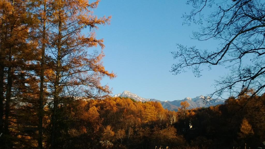 落葉松林越しに八ヶ岳