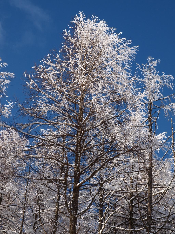 落葉松の樹氷3