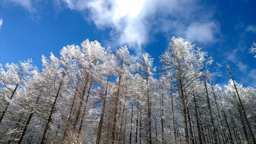 落葉松の樹氷2