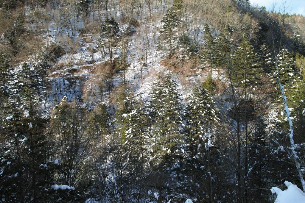 明治温泉沿いの雪の山肌