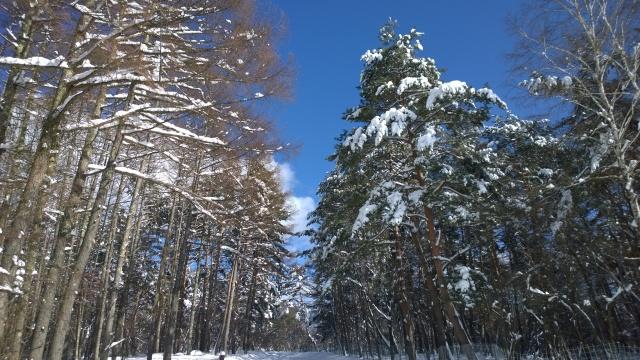 大雪の後で4