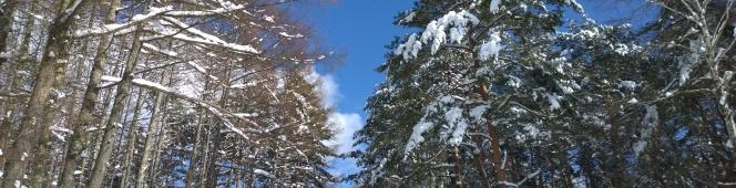 大雪の後で(積雪50cm越えの八ヶ岳西麓より)