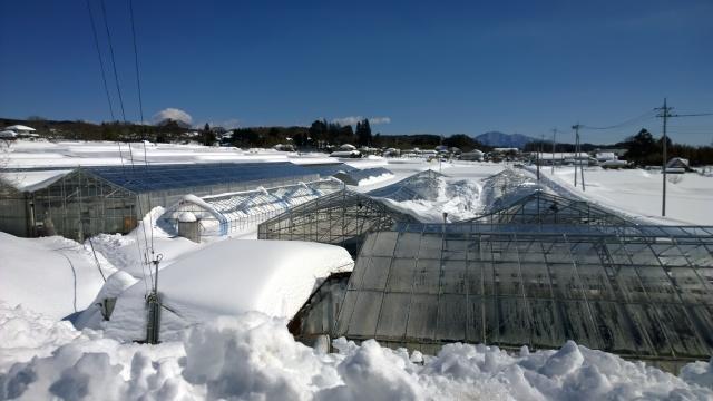雪で潰れたビニールハウス
