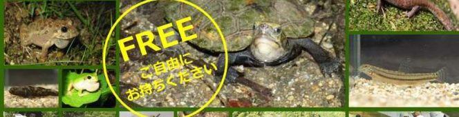 今月の読本(PDF編)「ぎふの淡水生物をまもる」(楠田哲士編 岐阜大学応用生物学部動物繁殖学研究室)もっと知ってほしい地元の淡水生物