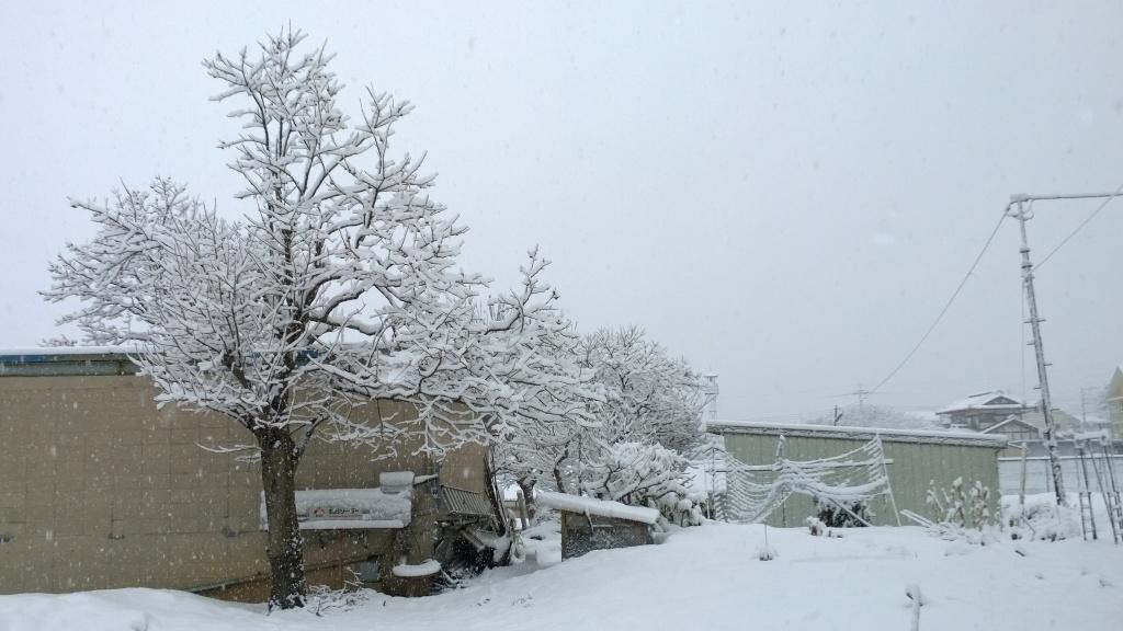 吹雪の朝1_140305
