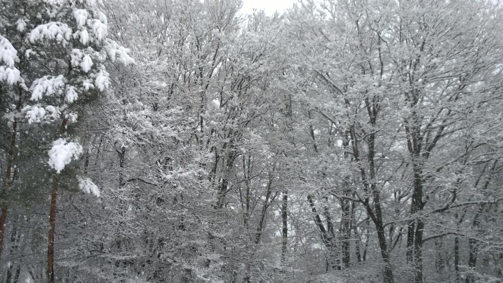 吹雪の朝2_140305