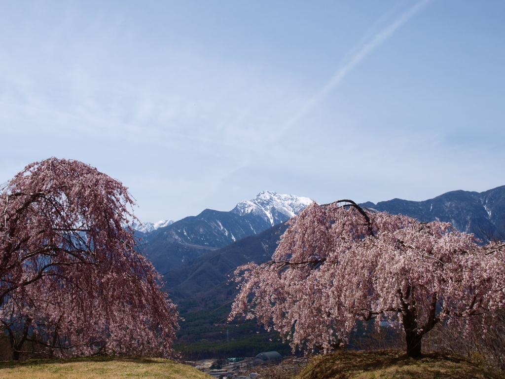 城山公園の桜と甲斐駒