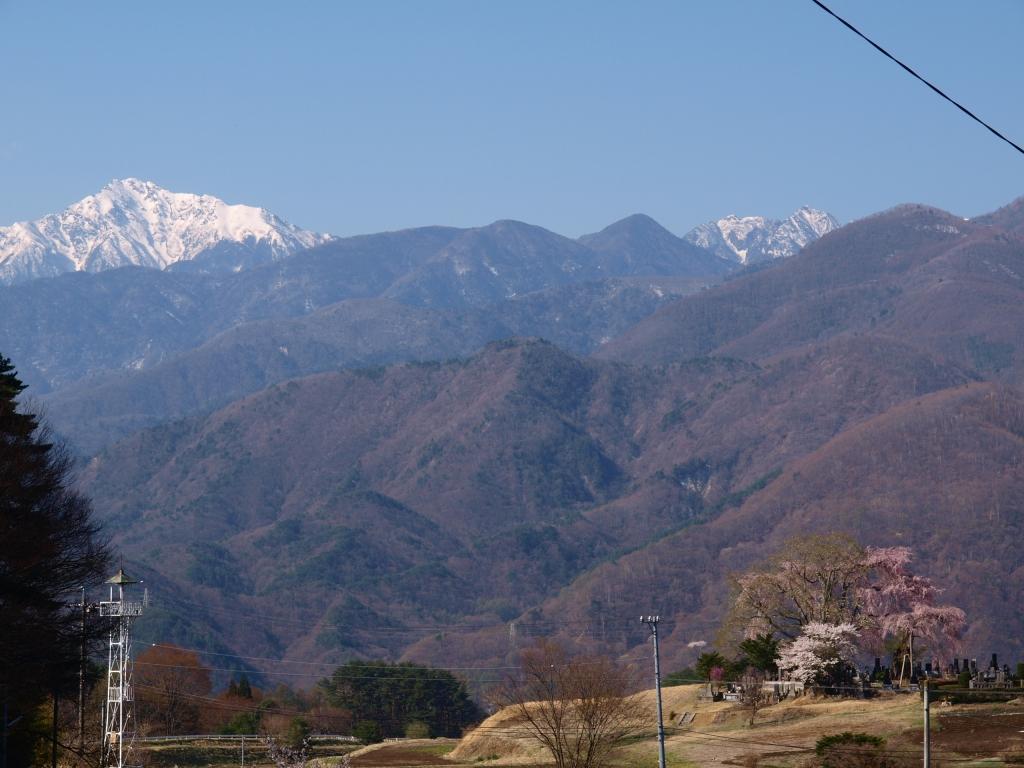田端の枝垂れ桜140423_3