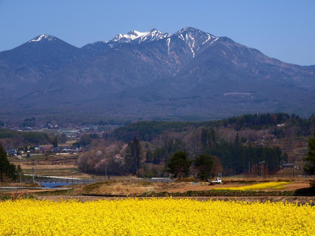 菜の花畑と八ヶ岳2