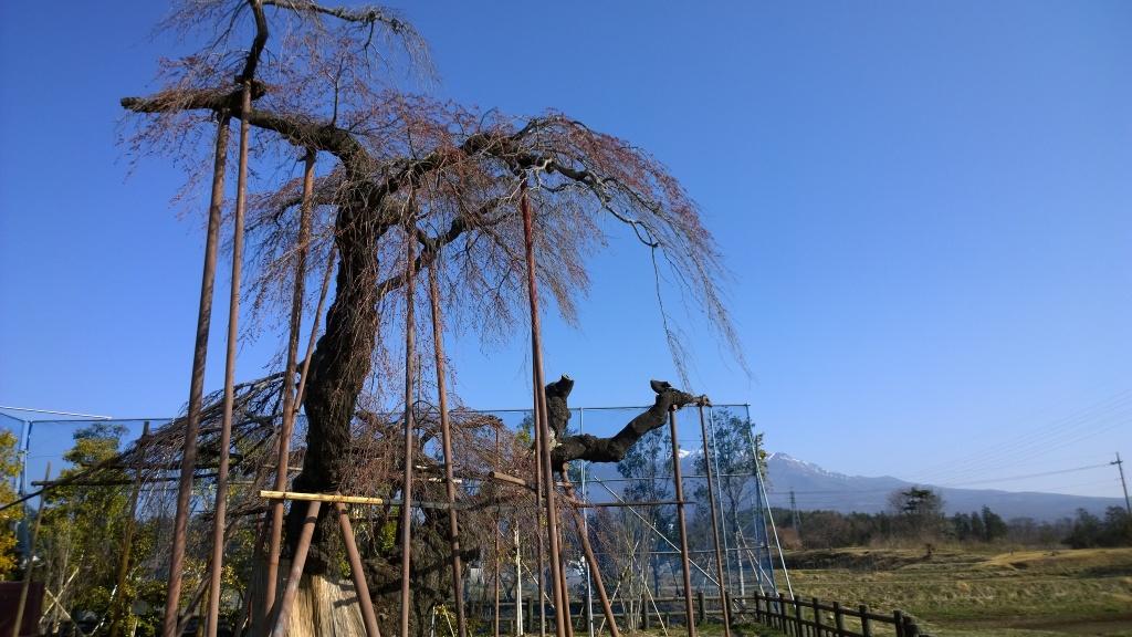 神田の枝垂れ桜20140408_1