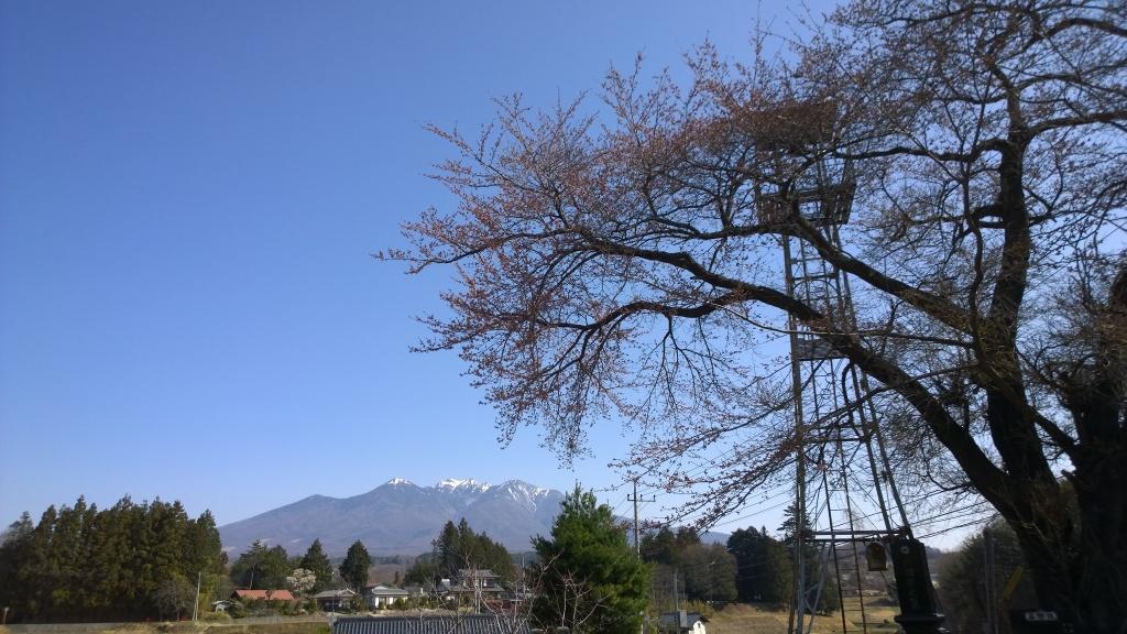 火の見櫓と八ヶ岳をバックに桜の木を20140411
