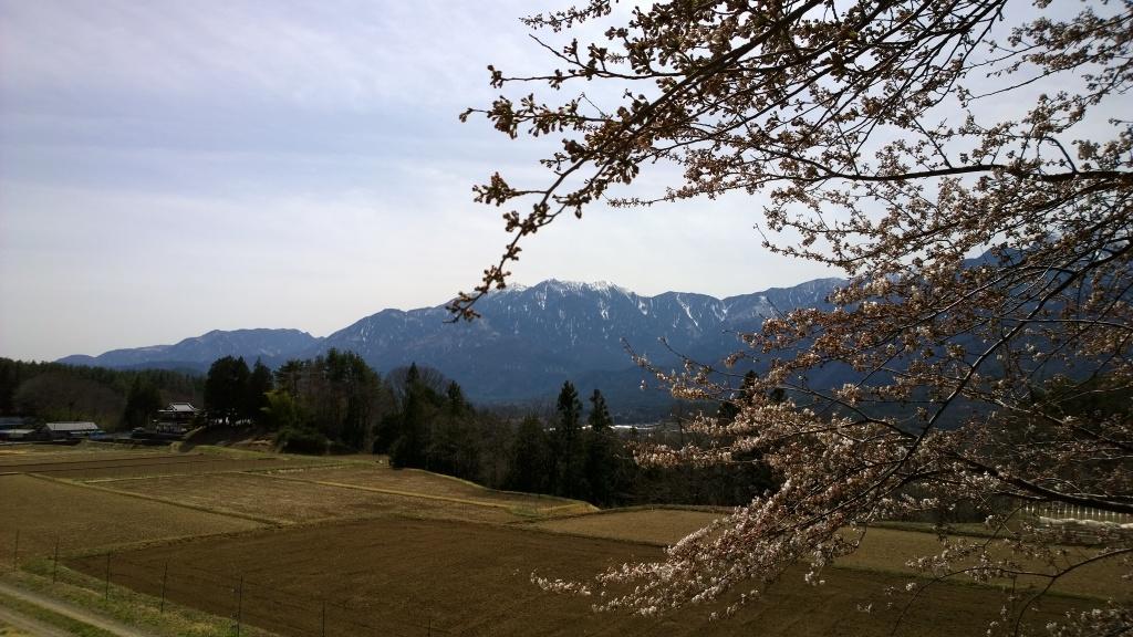 鳳凰三山と桜の花を