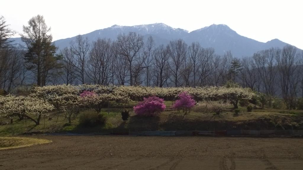 桃畑と鳳凰三山