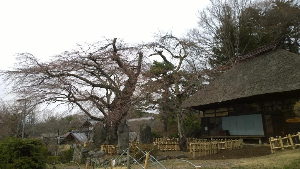 高森観音堂の開花前の桜140412_1