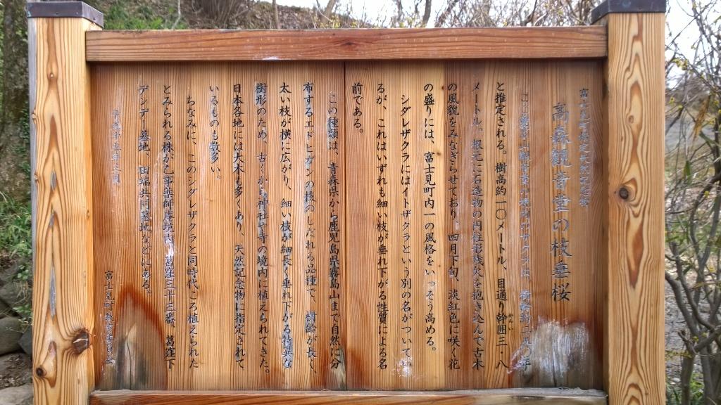 高森観音堂の枝垂れ桜解説板
