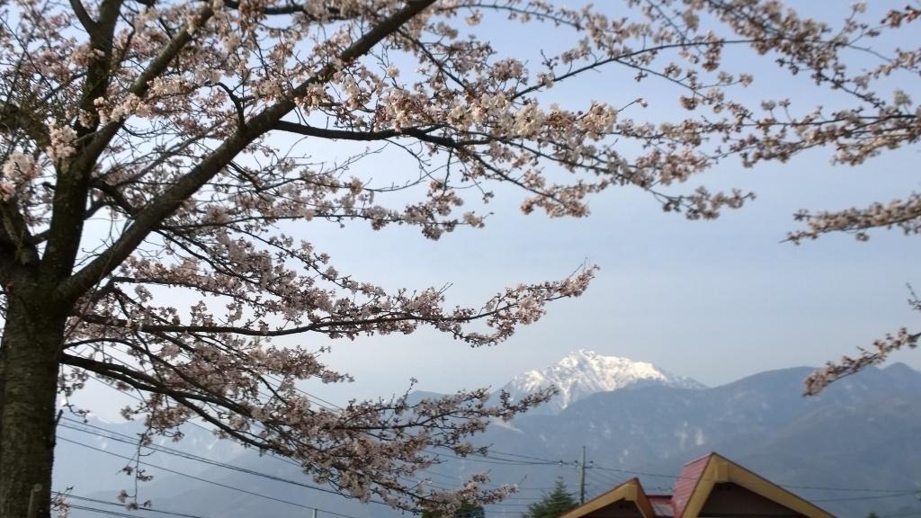 甲斐駒をバックに咲き始めた桜
