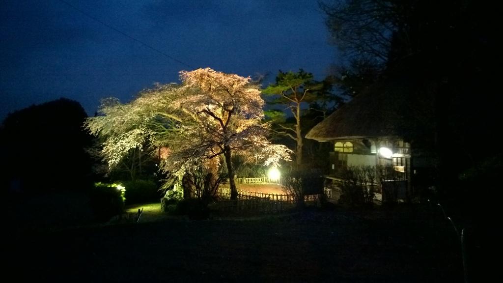 高森観音堂の夜桜20140419_3