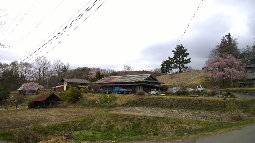 高森観音堂の枝垂れ桜と信濃境の桜達140420_13