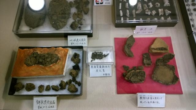 井戸尻考古館の炭化麦出土品