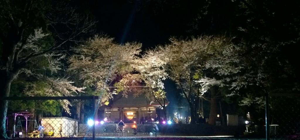 大宮神社の夜桜と神輿