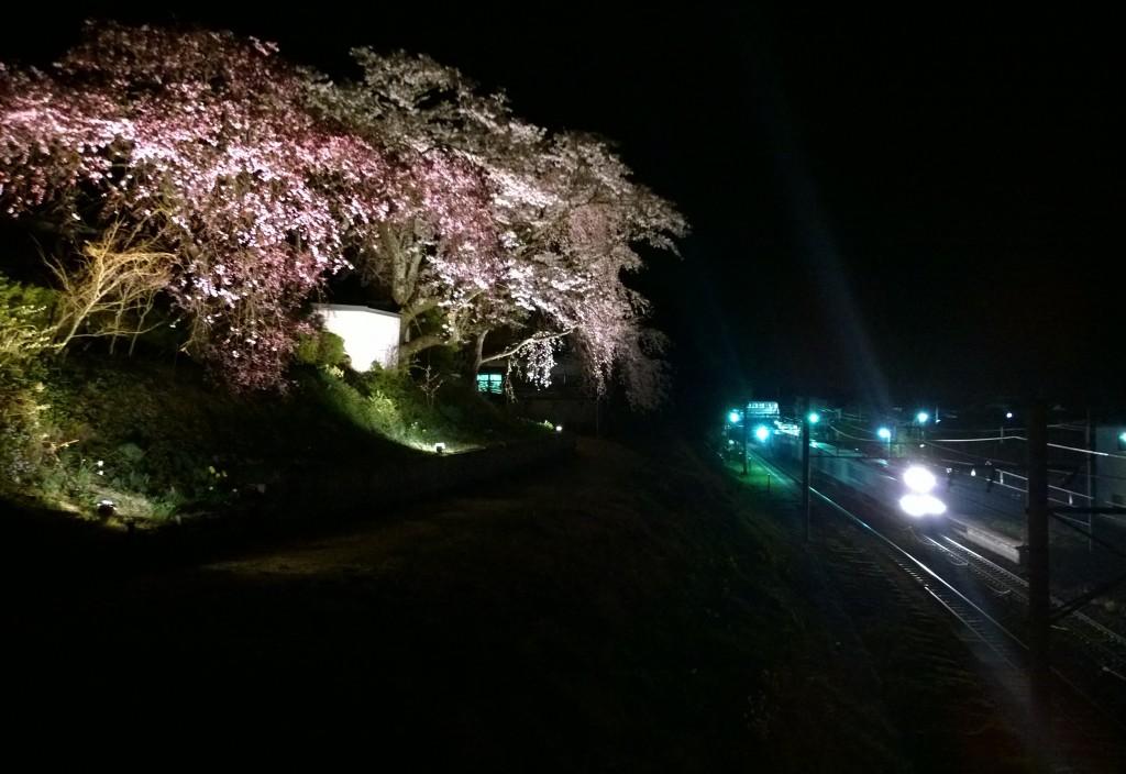 信濃境駅と夜桜