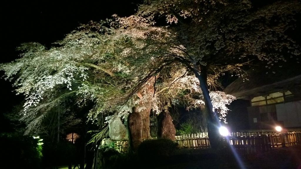 高森観音堂の夜桜20140426_2