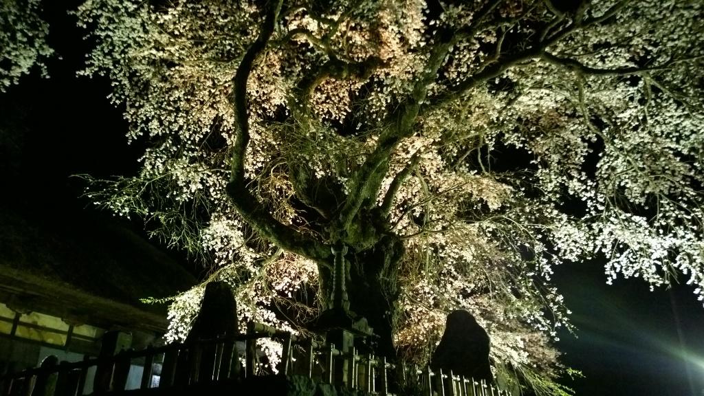 高森観音堂の夜桜20140426_1