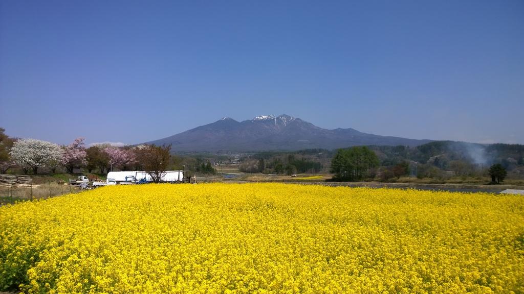 菜の花畑と八ヶ岳1