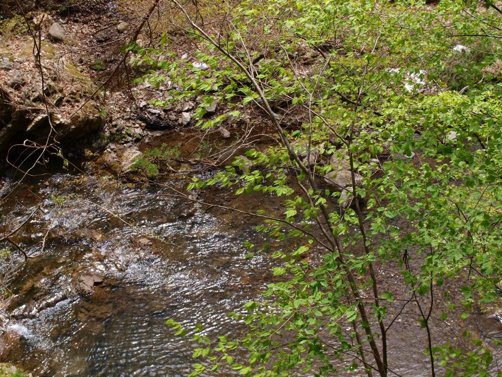 新緑の多留姫の滝6