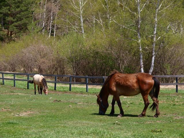 木曽馬の里と木曽馬たち5