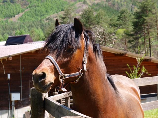 木曽馬の里と木曽馬たち6