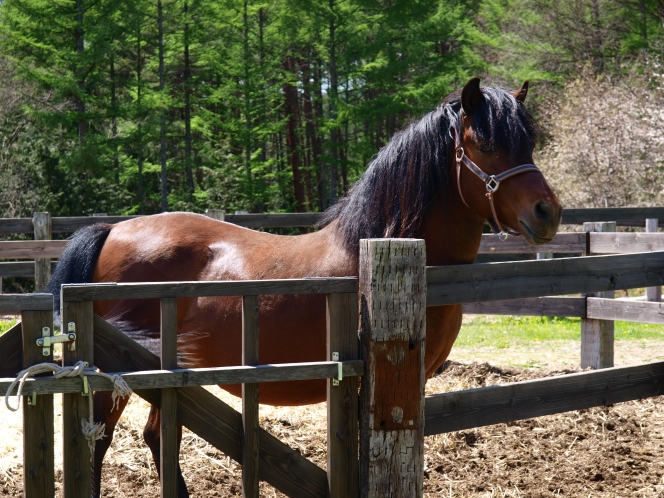 木曽馬の故郷と、ある種牡馬の物語を(開田高原・木曽馬の里と第三春山号)