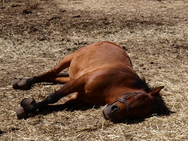 木曽馬の里と木曽馬たち8