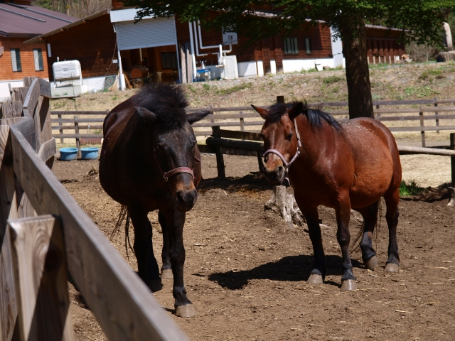 木曽馬の里と木曽馬たち9